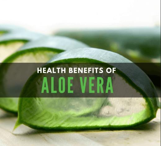 The Health Benefits Of Aloe Vera